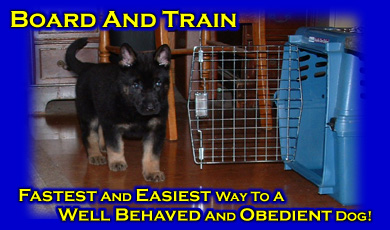 In Kennel Dog Training Ohio Michigan